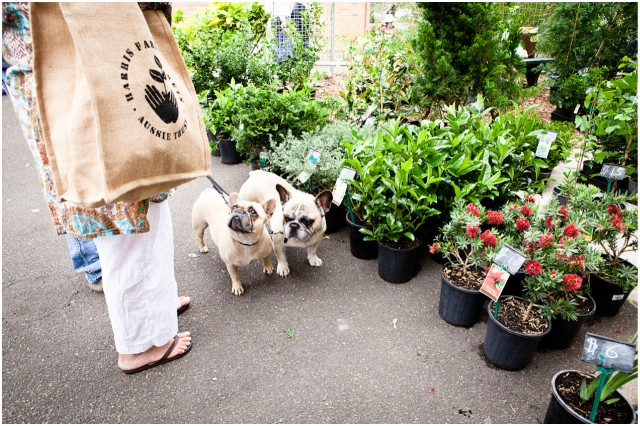 pugs with shopping bags